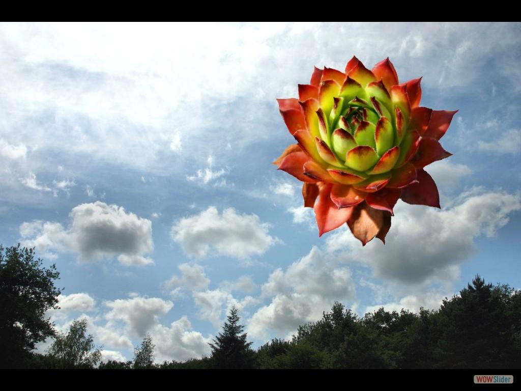 lucht  met lotus
